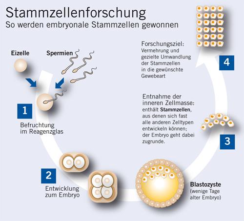 Stammzellen: Bausteine des Lebens Vita 34