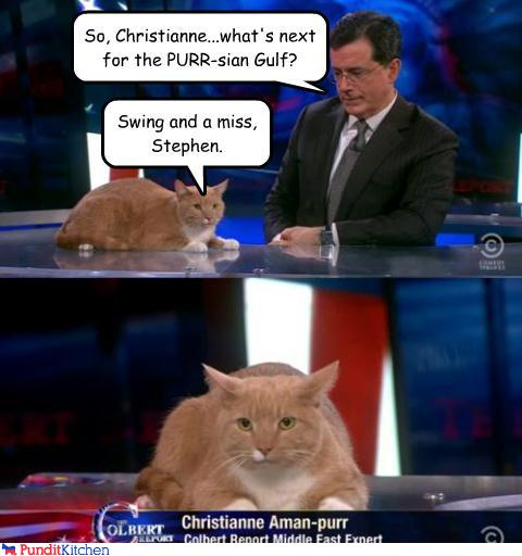 43048,1297156134,political-pictures-stephen-colbert-cat-christianne-aman-purr