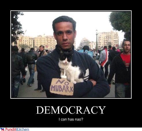 43048,1297156415,political-pictures-egyptian-riots-cat-can-has-democracy