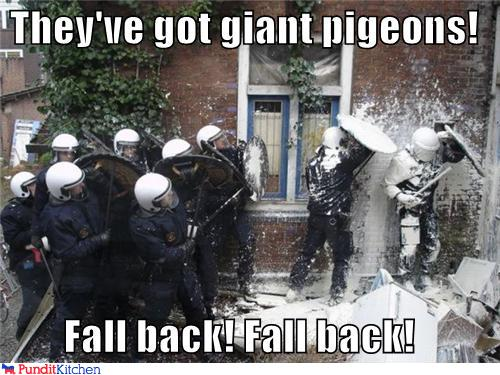 43048,1297782640,political-pictures-swat-police-giant-pigeons