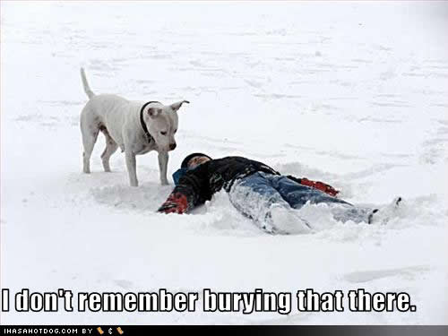 43048,1298977181,funny-dog-pictures-burying-that