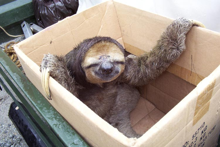 70749,1297807712,sloth in a box