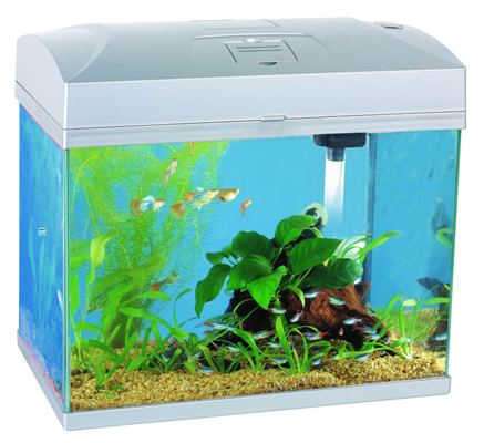 aquarien eure erfahrungen seite 3 allmystery. Black Bedroom Furniture Sets. Home Design Ideas