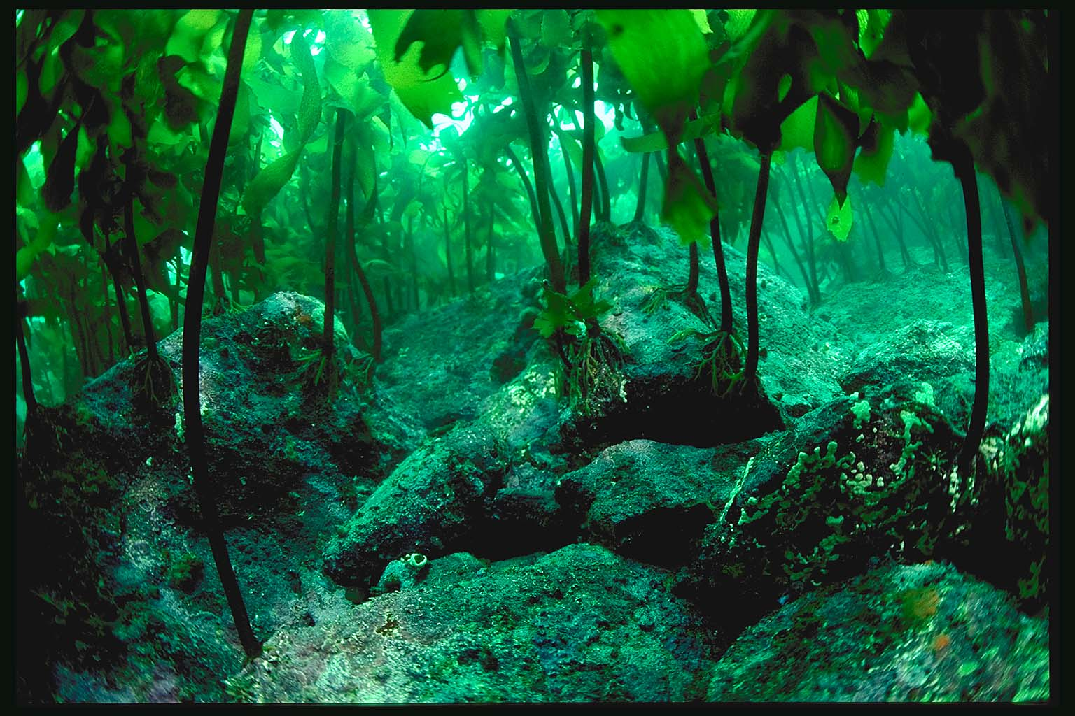 Kelp Forest by Kxmode on DeviantArt