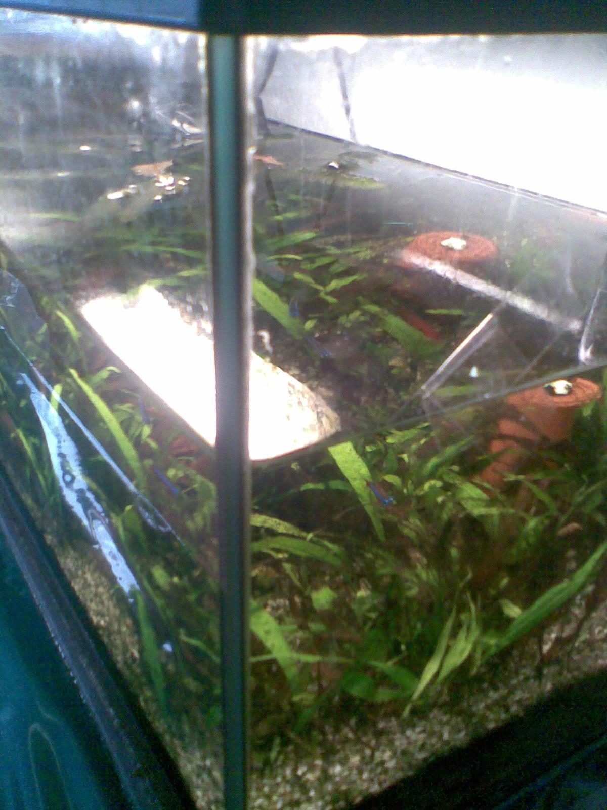 ich brauche hilfe mit meinem aquarium allmystery. Black Bedroom Furniture Sets. Home Design Ideas