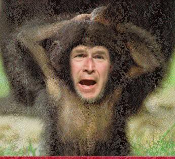 Stammt Der Mensch Vom Affen Seite 6 Allmystery