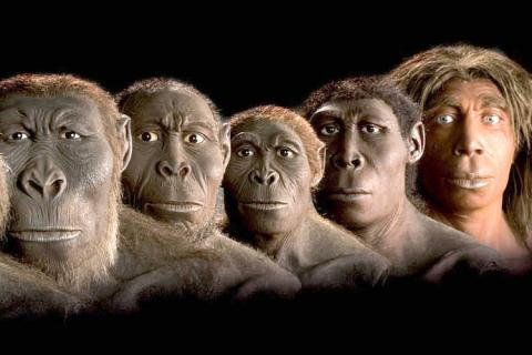 Affe Und Mensch