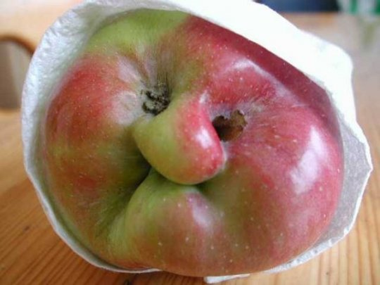 http://www.allmystery.de/dateien/mg64684,1280940905,granny-smith.jpg