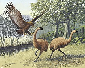 /dateien/mt11978,1259602191,300px-Giant Haasts eagle attacking New Zealand moa