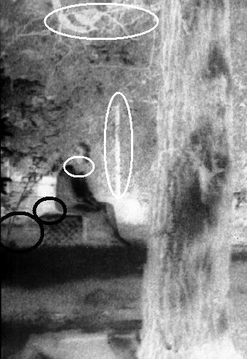 Fotos Mit Geistern Im Hintergrund