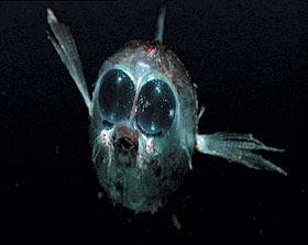 Mariannengraben Tiefe