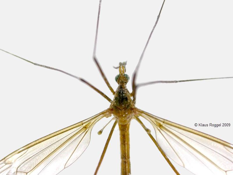 was ist das f r ein insekt seite 3 allmystery. Black Bedroom Furniture Sets. Home Design Ideas