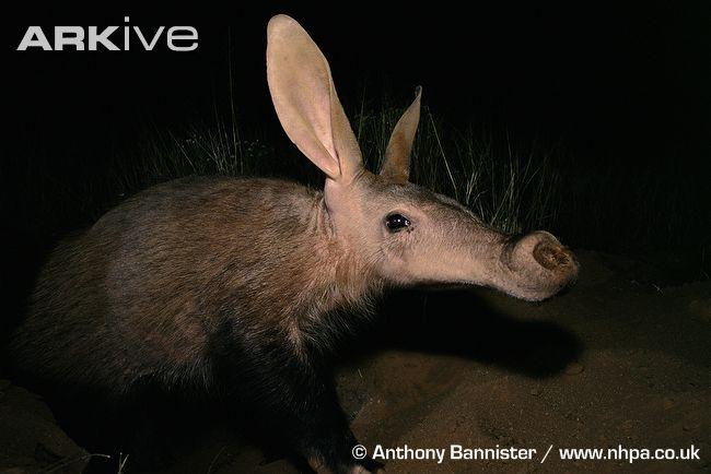 Ausgestorbene und bedrohte tierarten