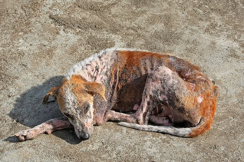 Blutsaugende Vampir Hunde In Den Usa Gefunden Allmystery