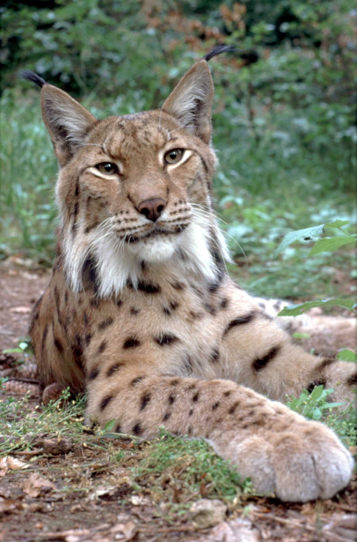 luchs5 anders