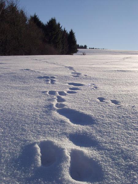 komische fu spuren im schnee gesehen seite 2 allmystery