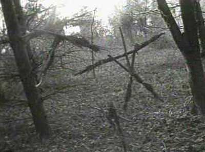 mt65844,1284421106,blair-witch-project-photo2