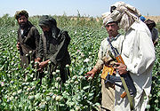 pr27679,1256169529,180px-Afghans in poppy field
