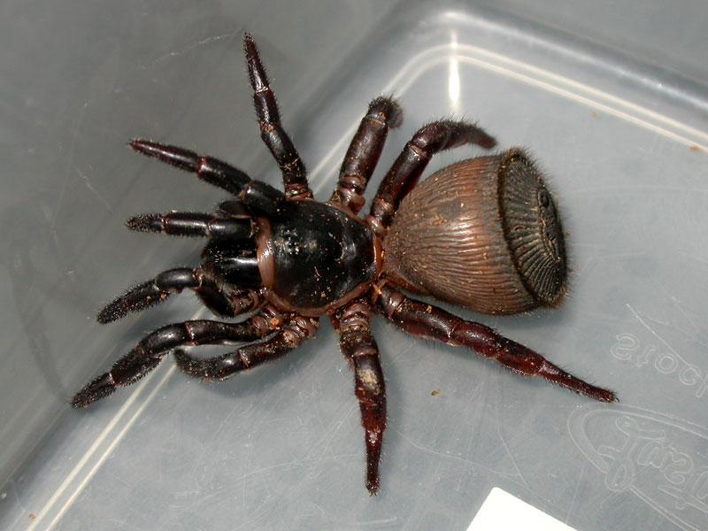 Neue Spinnenart Entdeckt