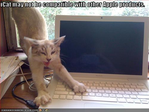 uh43048,1250957121,funny-pictures-cat-is-not-compatible-with-laptop
