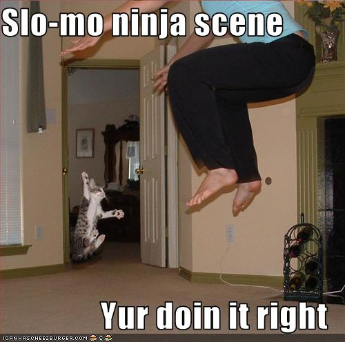 uh43048,1251657330,funny-pictures-cat-does-ninja-scene