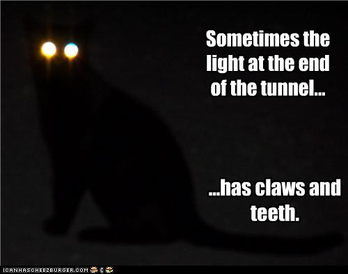 uh43048,1251817445,funny-pictures-cat-is-light-at-end-of-tunnel