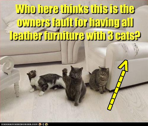 A Catu0027s Natural Instinct Is To Scratch His Nails. If Your Furniture In Your  Home Is Being Destructed, Read The Following Tips On How To Show Your Cat  Where ...