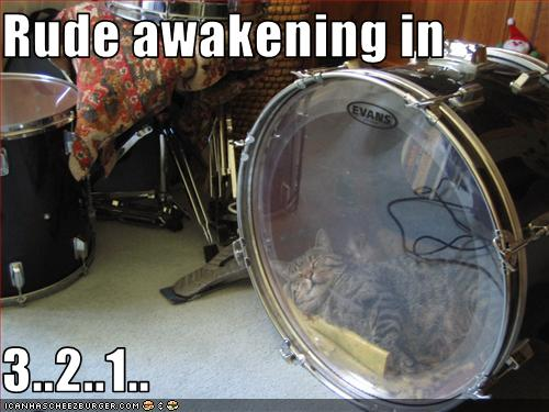 uh43048,1254671053,funny-pictures-cat-will-have-rude-awakening
