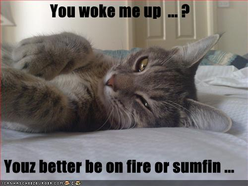 uh43048,1254671120,funny-pictures-cat-is-angry-you-woke-him