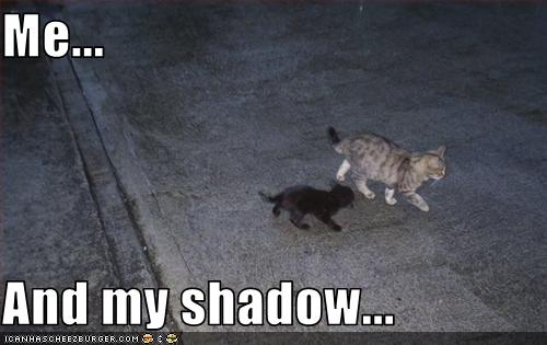 uh43048,1255440781,funny-pictures-kitten-has-shadow