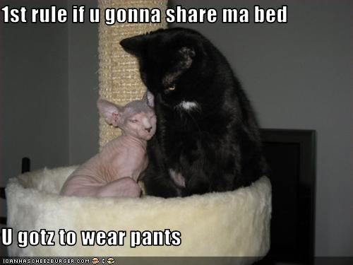 uh43048,1255440803,funny-pictures-cat-is-in-bed-without-pants
