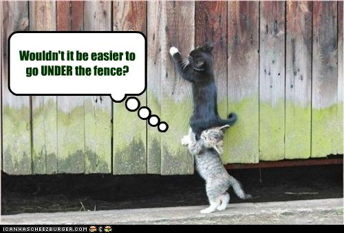 uh43048,1255440835,funny-pictures-cats-go-over-fence