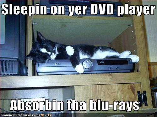 uh43048,1255441404,funny-pictures-cat-sleeps-on-your-dvd-player