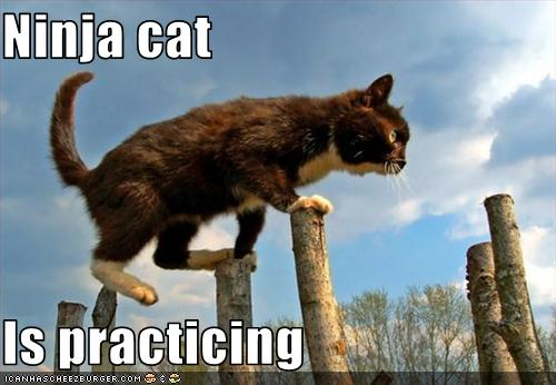 uh43048,1255441429,funny-pictures-ninja-cat-practices