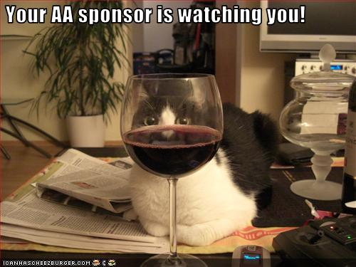 uh43048,1256066717,funny-pictures-cat-watches-your-wine