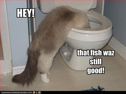 uh43048,1256477879,funny-pictures-cat-watches-fish-in-toilet