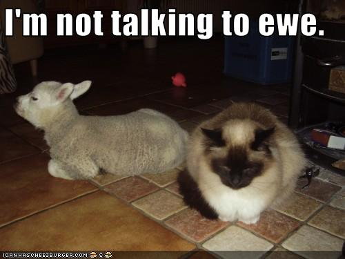 uh43048,1256477968,funny-pictures-cat-is-not-talking-to-ewe