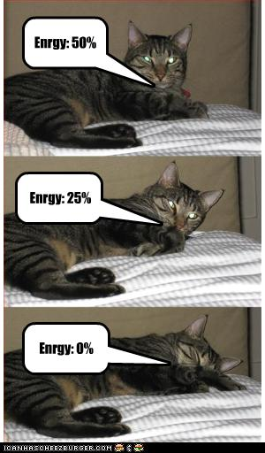 uh43048,1256477985,funny-pictures-cat-is-losing-energy