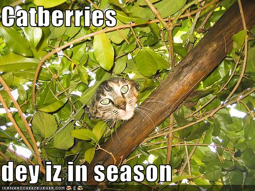 uh43048,1256478011,funny-pictures-cat-is-in-tree