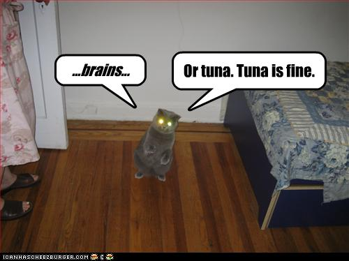 uh43048,1256583563,funny-pictures-cat-wants-brains-or-tuna