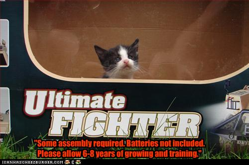 uh43048,1256583655,funny-pictures-kitten-is-ultimate-fighter