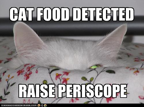 uh43048,1256724329,funny-pictures-cat-detects-food