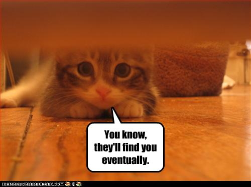 uh43048,1257445469,funny-pictures-kitten-says-they-will-find-you