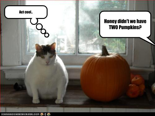 uh43048,1257445502,funny-pictures-cat-pretends-to-be-pumpkin