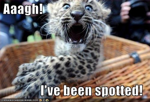 uh43048,1257445519,funny-pictures-leopard-has-been-spotted