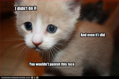 uh43048,1257849032,funny-pictures-kitten-is-innocent