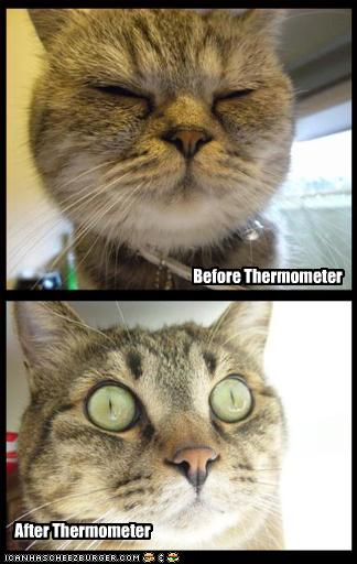 uh43048,1257849069,funny-pictures-cat-before-and-after-thermometer