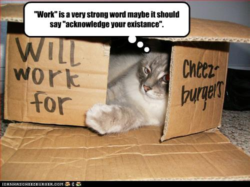 uh43048,1257849084,funny-pictures-cat-may-work-for-cheeseburgers