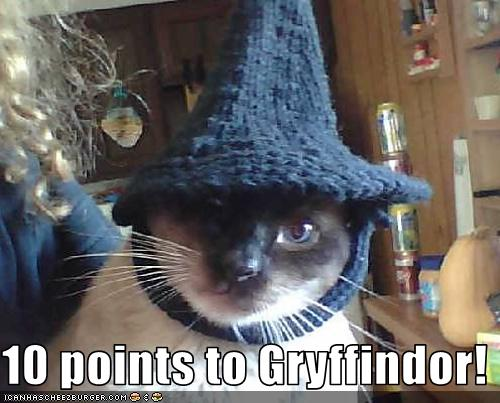 uh43048,1257849102,funny-pictures-cat-wears-wizard-hat