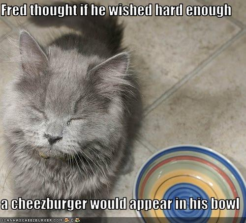 uh43048,1258224655,funny-pictures-cat-wishes-for-cheeseburger